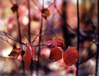 Jeannette Klute, Red Leaves